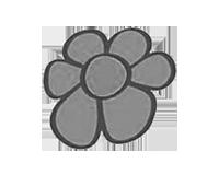 Phal.Mituo Golden Tiger'White Tiger. 3.5